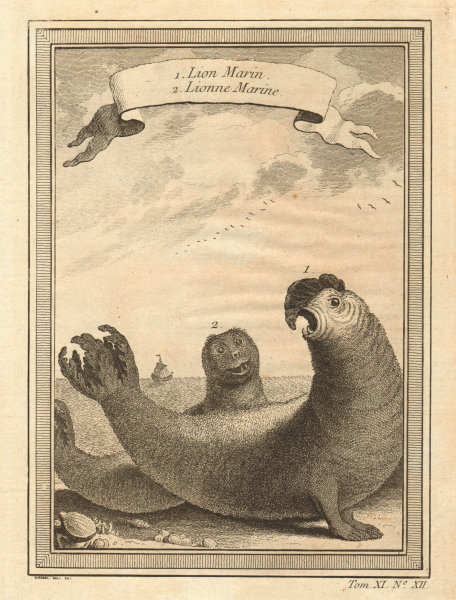 Associate Product Lion Marin. Lionne Marine. Male and female Sea Lions, Chile 1753 old print