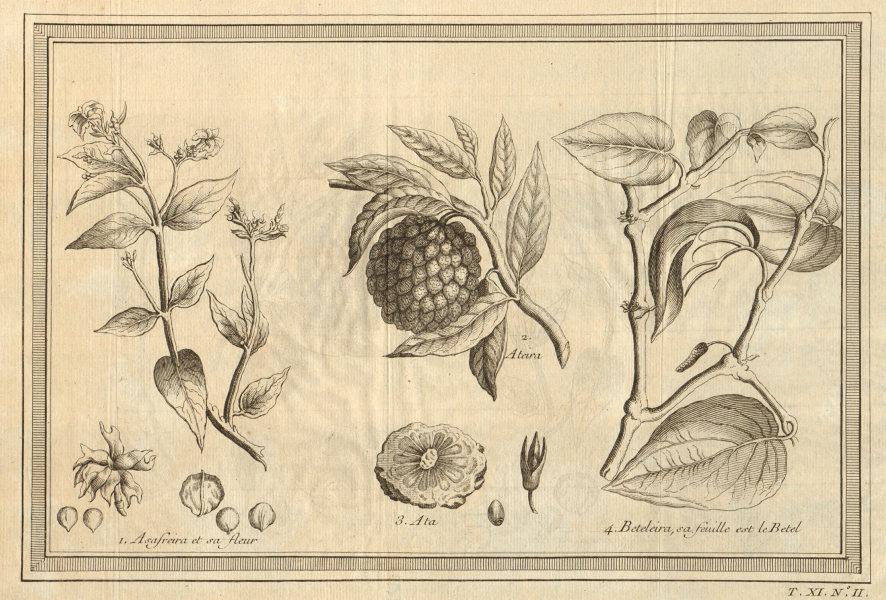 Associate Product Asafreira. Sugar apple, sweetsop or custard apple. Areca palm or Betel 1753