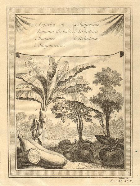 Associate Product Tropical fruit. Banana Jangomas Indian coffee plum Kokum Bhirand/Brinda 1753