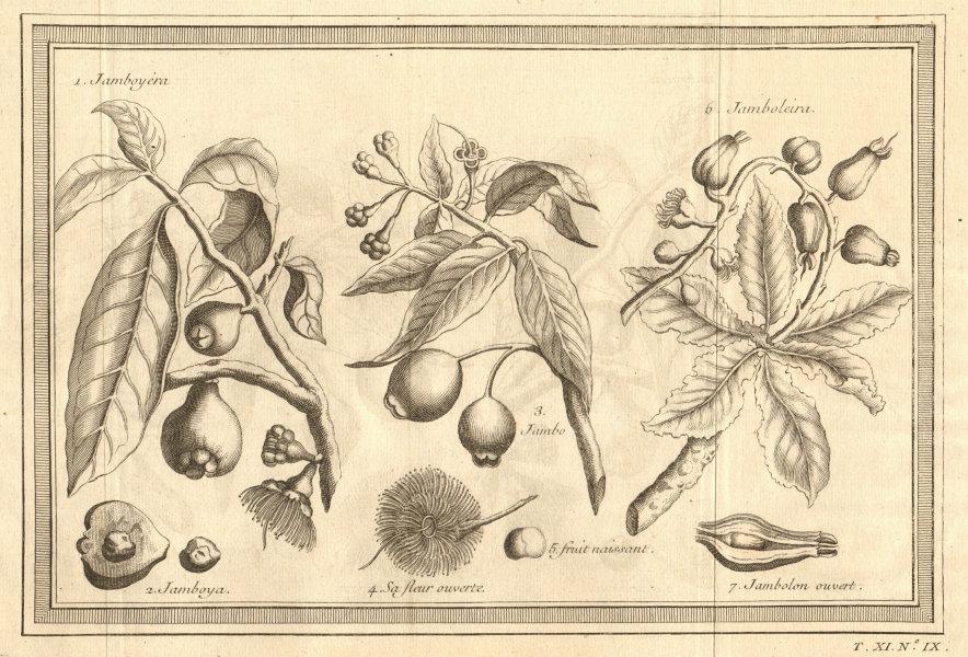 Associate Product Tropical fruit. Malay rose apple. Jambul. Jambolan. Java/black plum/Jamun 1753