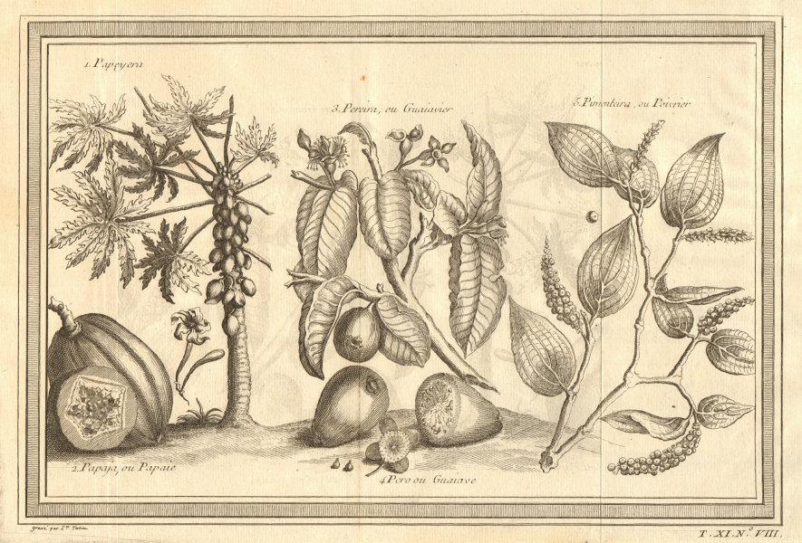 Associate Product Tropical fruit. Papaya tree. Papaya. Guava tree. Guava. Pepper tree 1753 print