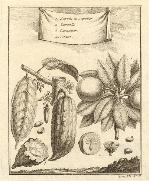 Associate Product Casimiroa. White/mamey sapote, soapapple or Mexican apple. Cocoa. Mexico 1754