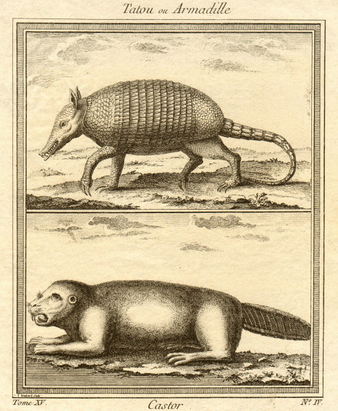Tatou ou Armadille. Castor. Armadillo. Beaver 1759 old antique print picture