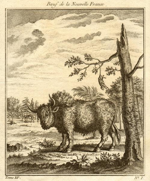 Associate Product 'Boeuf de la Nouvelle France'. Bull from New France / Canada. Quebec 1759