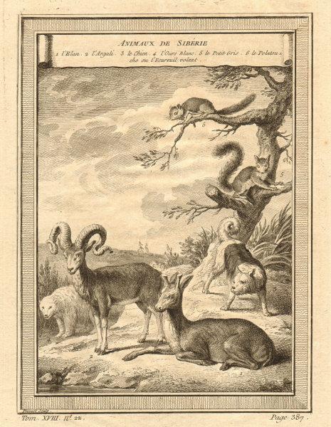 Associate Product Siberian animals. Eland. Argali. Polar Bear. Grey & Flying squirrel 1768 print