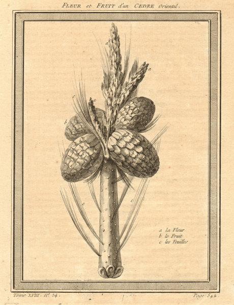 Associate Product 'Fleur et Fruits d'un Cèdre Oriental' Oriental Cedar fruit & flower. Russia 1768