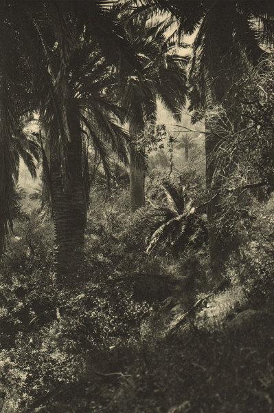 Associate Product CHILE. Ocoa. Rincon de la selva. Corner of the jungle 1932 old vintage print