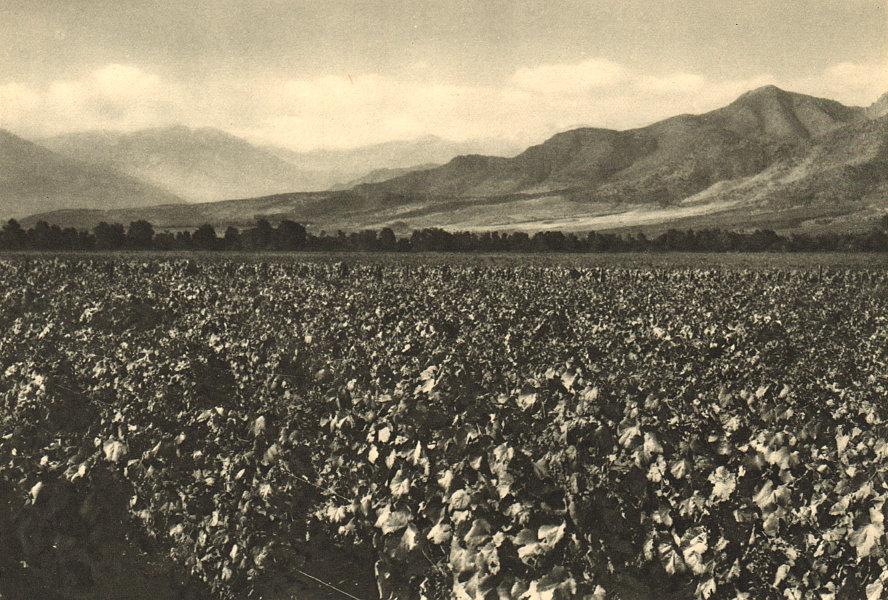 Associate Product CHILE. Viña Macul vineyard. Alrededores de Santiago 1932 old vintage print