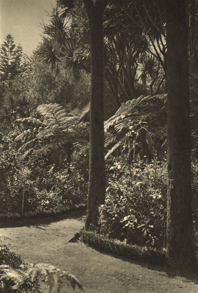 Associate Product CHILE. Lota. Parque. Park 1932 old vintage print picture