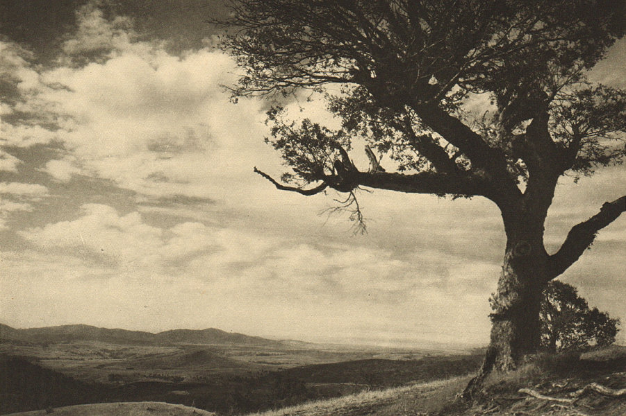 Associate Product CHILE. Campod de Angol 1932 old vintage print picture