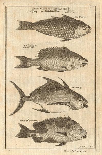 "Sierra Leone fish. Parrot fish ""Old wife"" Trevally Filefish Korango Bourse 1745"
