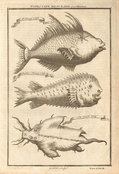 Cape Mesurado fish. Porcupine fish. Sea Devil ray. Liberia 1745 old print