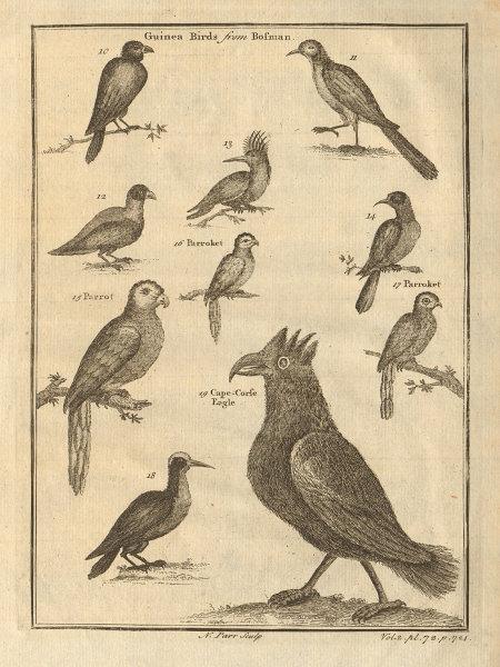 Guinea birds. Parrot. Parrokeet. Cape Coast eagle. West African birds 1745