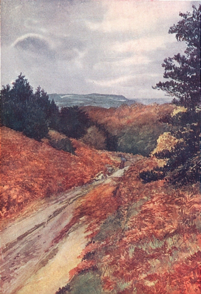 Associate Product YORKS. The Cleveland Hills. Hutton Woods, near Guisborough 1908 old print