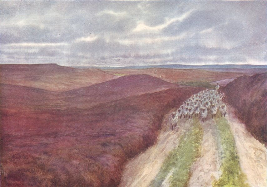 Associate Product YORKS. Cleveland Hills. Wide Expanse of Heather, from Great Ayton Moor 1908