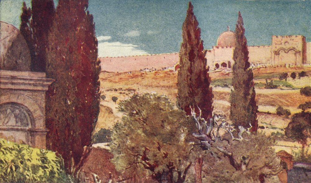 Associate Product JERUSALEM. The cypresses of the garden of Gethsemane 1902 old antique print