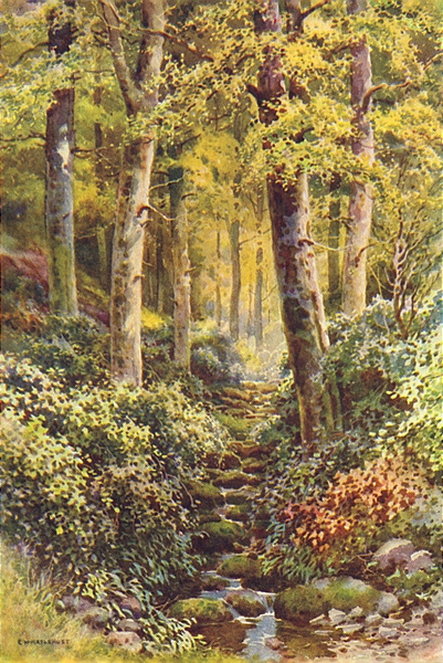 Associate Product Fairlight Glen. Sussex. By Ernest Haslehust 1920 old vintage print picture