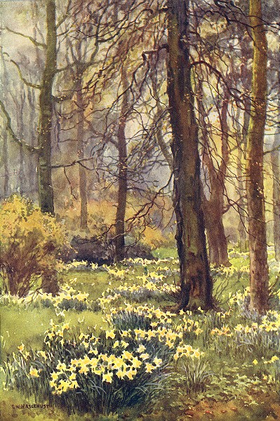 Associate Product The wilderness in spring, Hampton Court. London. By Ernest Haslehust 1920