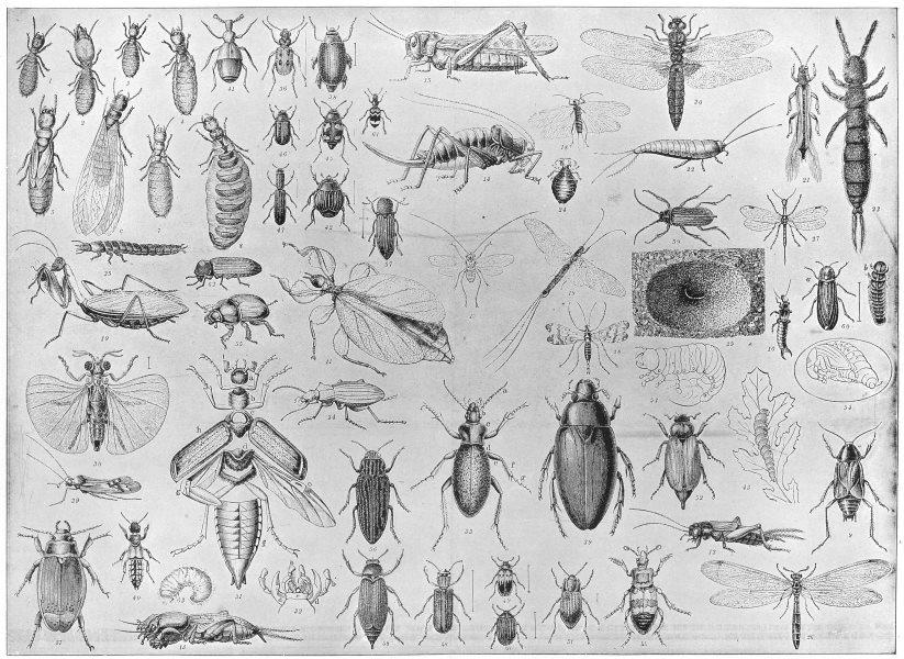 Associate Product ENTOMOLOGY. Termite Mantis insect Cricket Locust Earwig worm beetle tick 1907