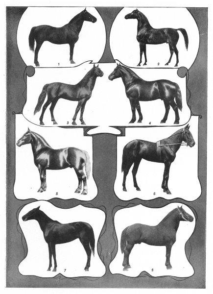 Associate Product HORSES. Coach Morgan Trotting Percheron Wilkes-Hambletonian Thoroughbred 1907
