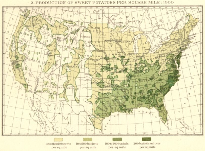 Associate Product USA. Production of Sweet potatoes per square mile.  1900 old antique map chart