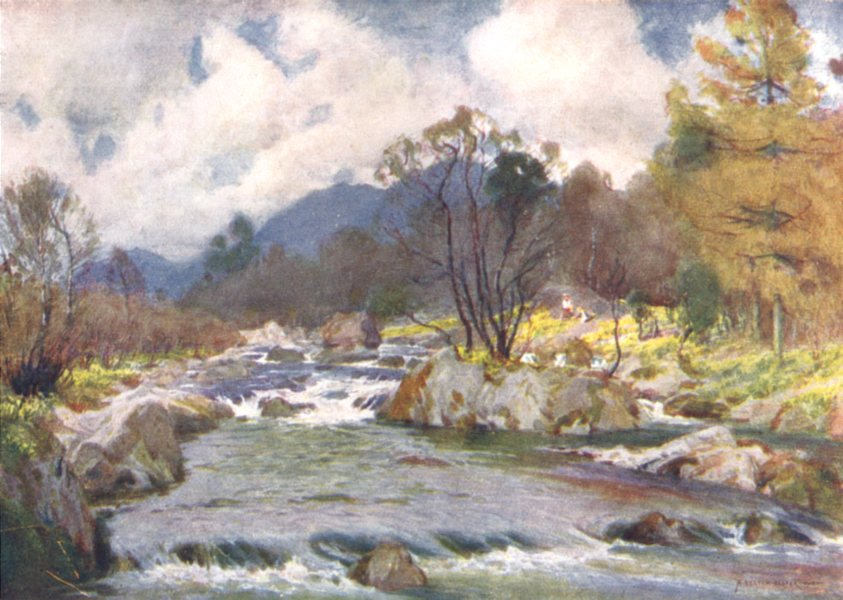 Associate Product CUMBRIA. Lake district. Daffodils by the banks of the silvery duddon 1908