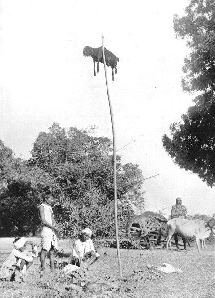 Associate Product INDIA. Sacrificial custom; Cholera or Famine sacrifices to Kali 1900 old print