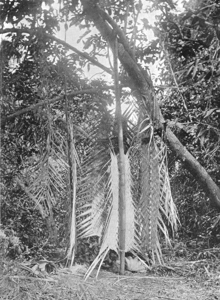 Associate Product MELANESIA. Melanesia. A Rain shrine;  1900 old antique vintage print picture