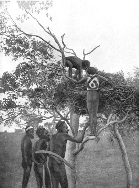 Associate Product AUSTRALIA. Burial custom-Warramunga tribe; Tree visit to see who sent magic 1900