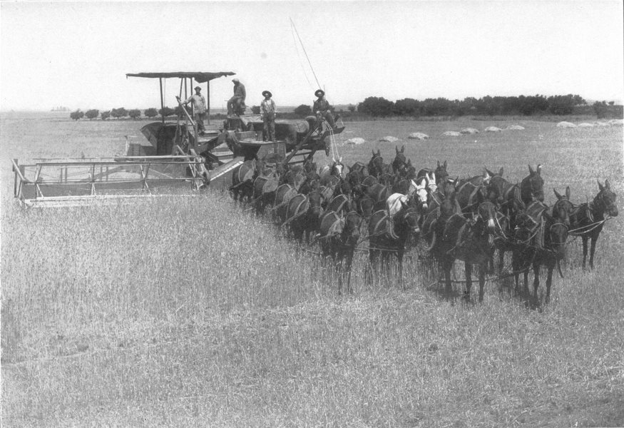 Associate Product FARMING. reaping and binding Machine. Combine harvester pulled by horses 1907