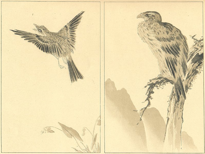 JAPAN. Two Birds. Anonymous Study 1890 old antique vintage print picture