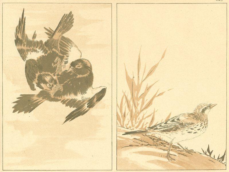 Associate Product JAPAN. Birds 1890 old antique vintage print picture