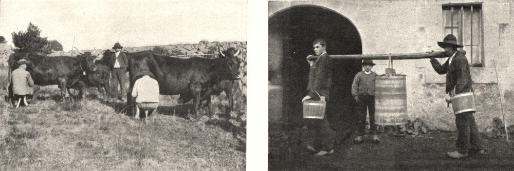 Associate Product MASSIF CENTRAL. Sur Hauts Paturages. Traite Transport du Lait Buron 1900 print