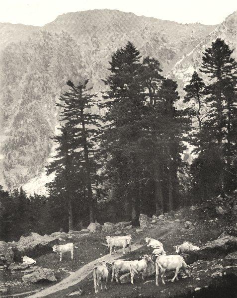 Associate Product HAUTES- PYRÉNÉES. Sur le Sentier du lac de Gaube 1900 old antique print
