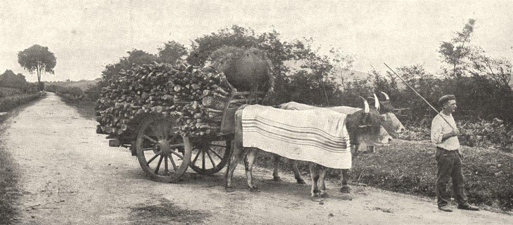 Associate Product PYRÉNÉES- ATLANTIQUES. Attelage Basque aux environs de Biarritz 1900 old print