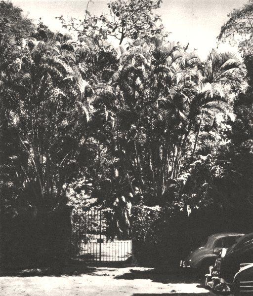 Associate Product BRAZIL. Rio de Janeiro. Largo do Boticario (2)  1951 old vintage print picture