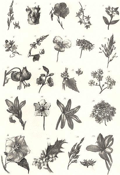 Associate Product PLANTS. Botany (1)  1880 old antique vintage print picture