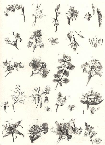 Associate Product PLANTS. Botany (2)  1880 old antique vintage print picture