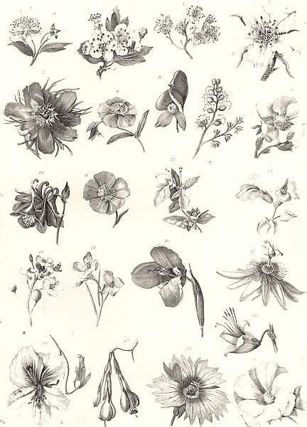 Associate Product PLANTS. Botany (3)  1880 old antique vintage print picture