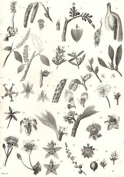 Associate Product PLANTS. Botany (5)  1880 old antique vintage print picture