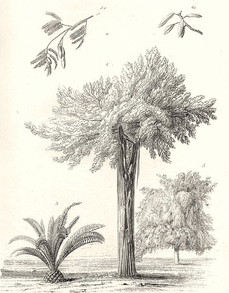 Associate Product GREECE. Exotic Plants. 3. Lamia Elliptica. Ficus Virens. Tamarind tree 1880
