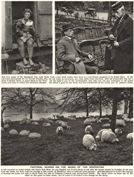 Associate Product LONDON. Sheep on the Banks of the Serpentine. Park chair rental 1926 old print