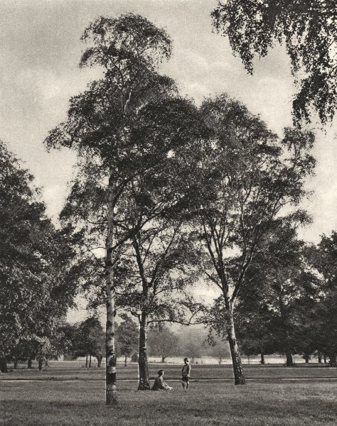 LONDON. A summer morning in Hyde Park. Children 1926 old vintage print picture