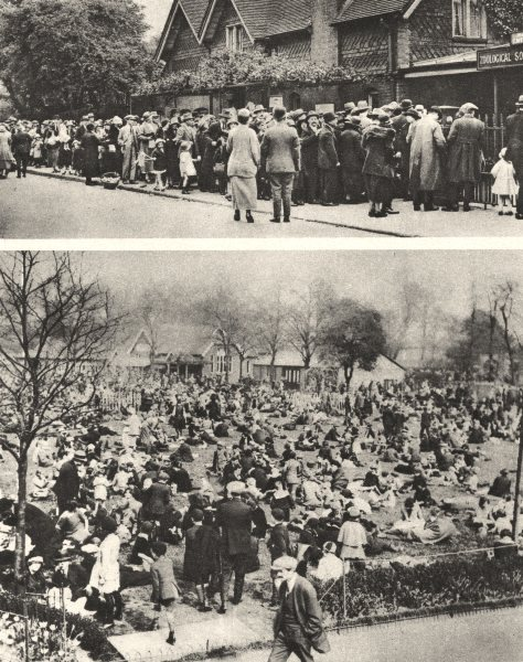 Associate Product LONDON ZOO. Holiday naturalists crowd zoo day's entertainment instruction 1926