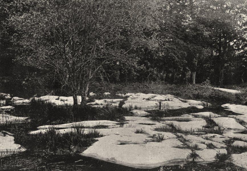 Associate Product SEINE- ET- MARNE. Forêt de Fontainebleau. Mare des Pierres plates 1895 print
