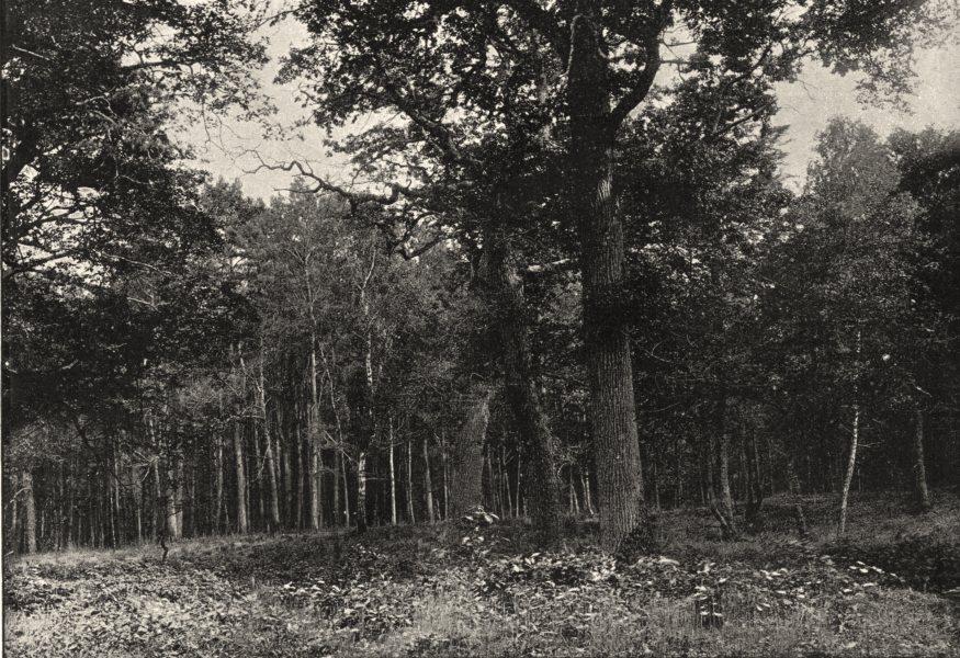 Associate Product SEINE- ET- MARNE. Forêt de Fontainebleau. Sentier des Artistes 1895 old print
