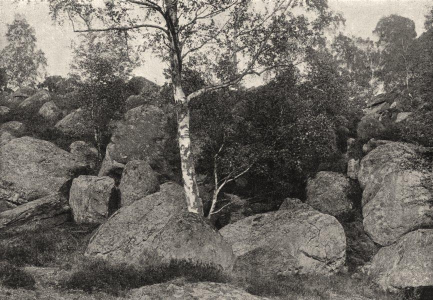 Associate Product SEINE- ET- MARNE. Forêt de Fontainebleau. Long Rocher 1895 old antique print