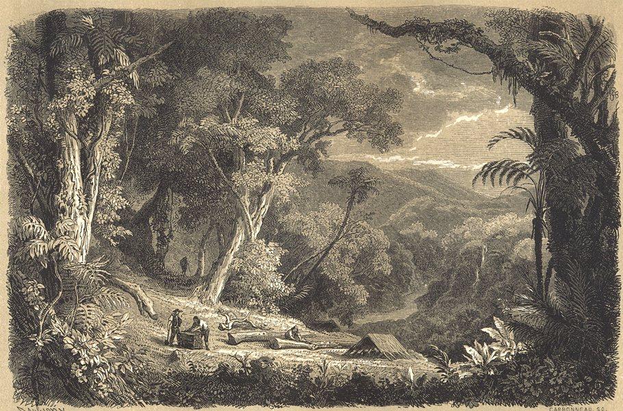 Associate Product LANDSCAPES. Forêt de Quinquinas exploitée par les cascarilleros 1852 old print