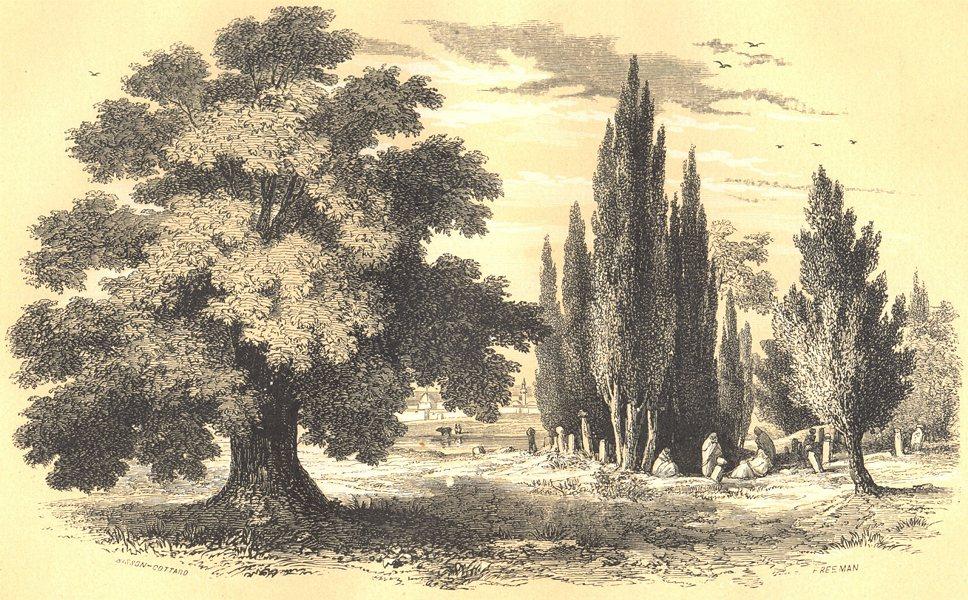 Associate Product BOTANICALS.1.Sycomore.Acer pseudoplatanus;2.Cyprés.Cupressus.Tamarix. 1852