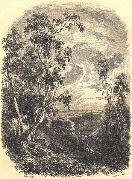 Associate Product BOTANICALS. Bouleau. Betula.  (Bétulacées)  1852 old antique print picture
